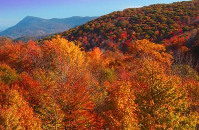 Elk Knob State Park fall color