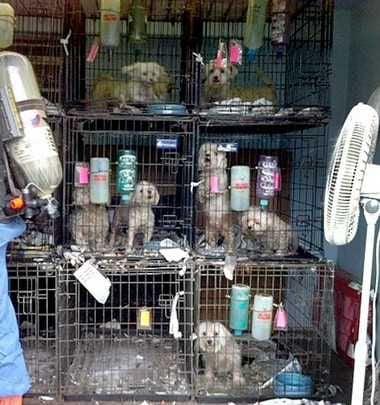The Problem With Puppy Mills Columns Wataugademocratcom
