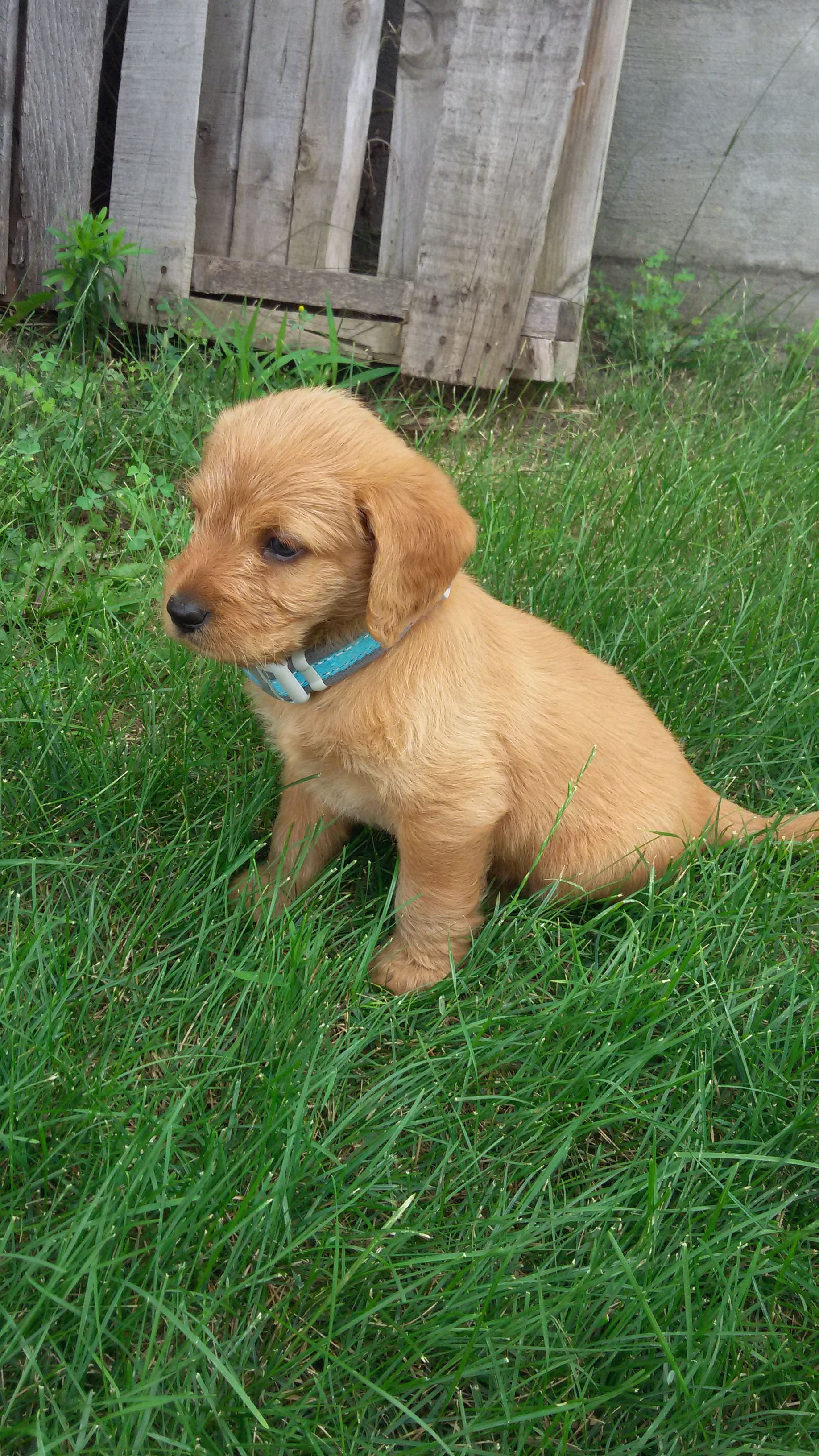 PUPPIES FOR SALE image 1