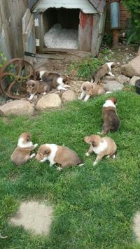 Sale | Pets | wcfcourier com