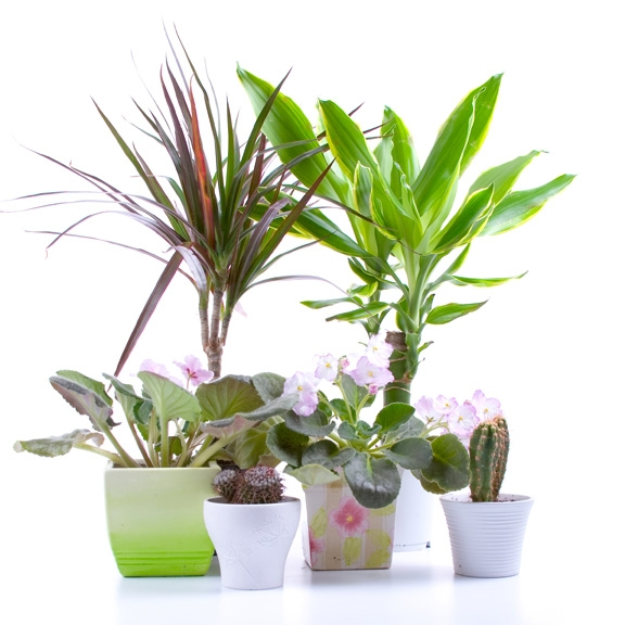 Cold comfort: House plants need TLC to thrive indoors after summer ...