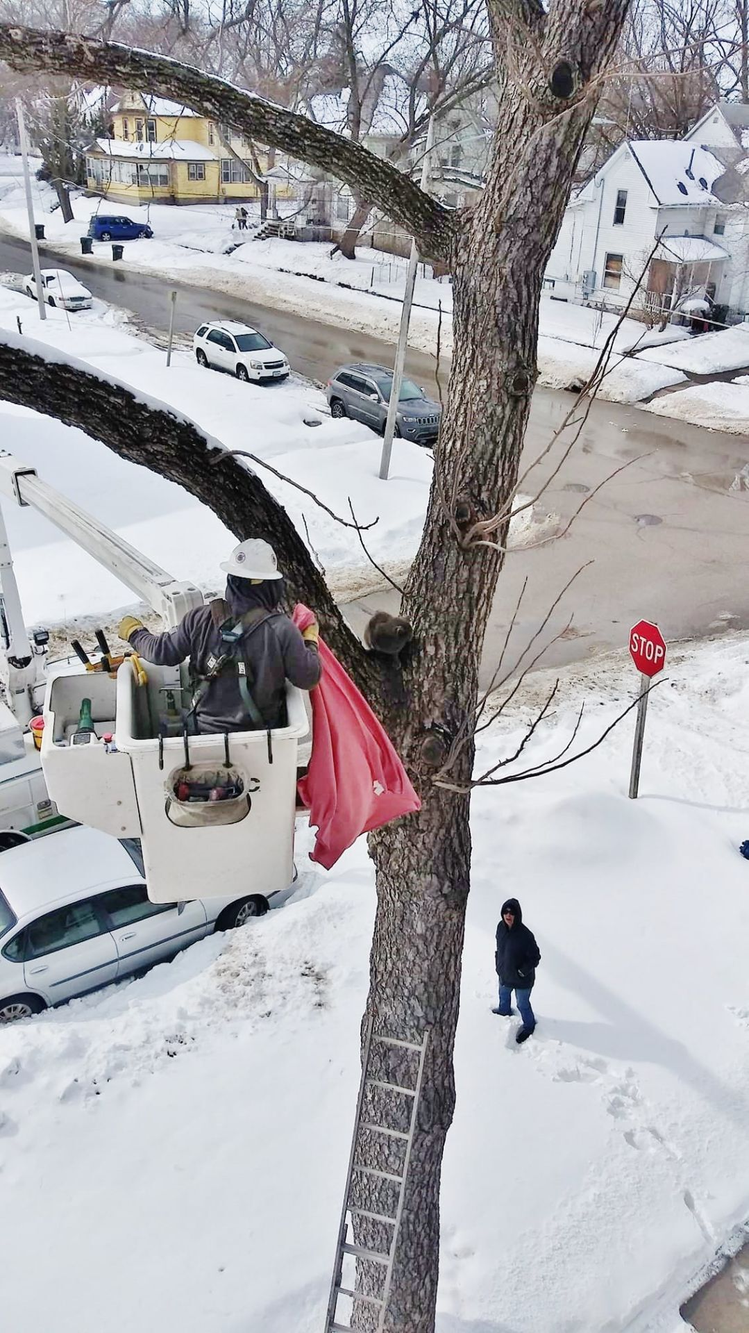 , [:en]Cat rescued from tree after days caught in Waterloo sub-zero temps, snowstorm | Native Information[:], Laban Juan
