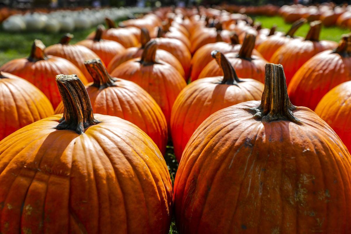 Keifer Pumpkins 5