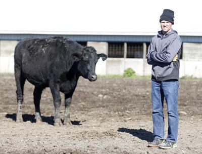 101618bp-Hansens-Wagyu-Holstein-Beef-1