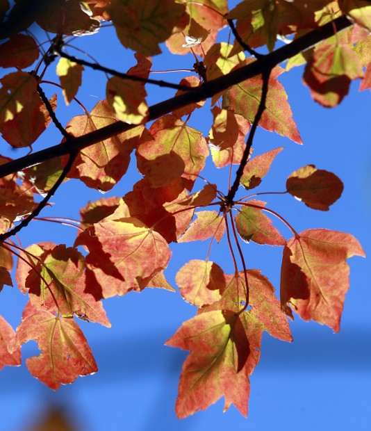 092712rc-fall-colors2