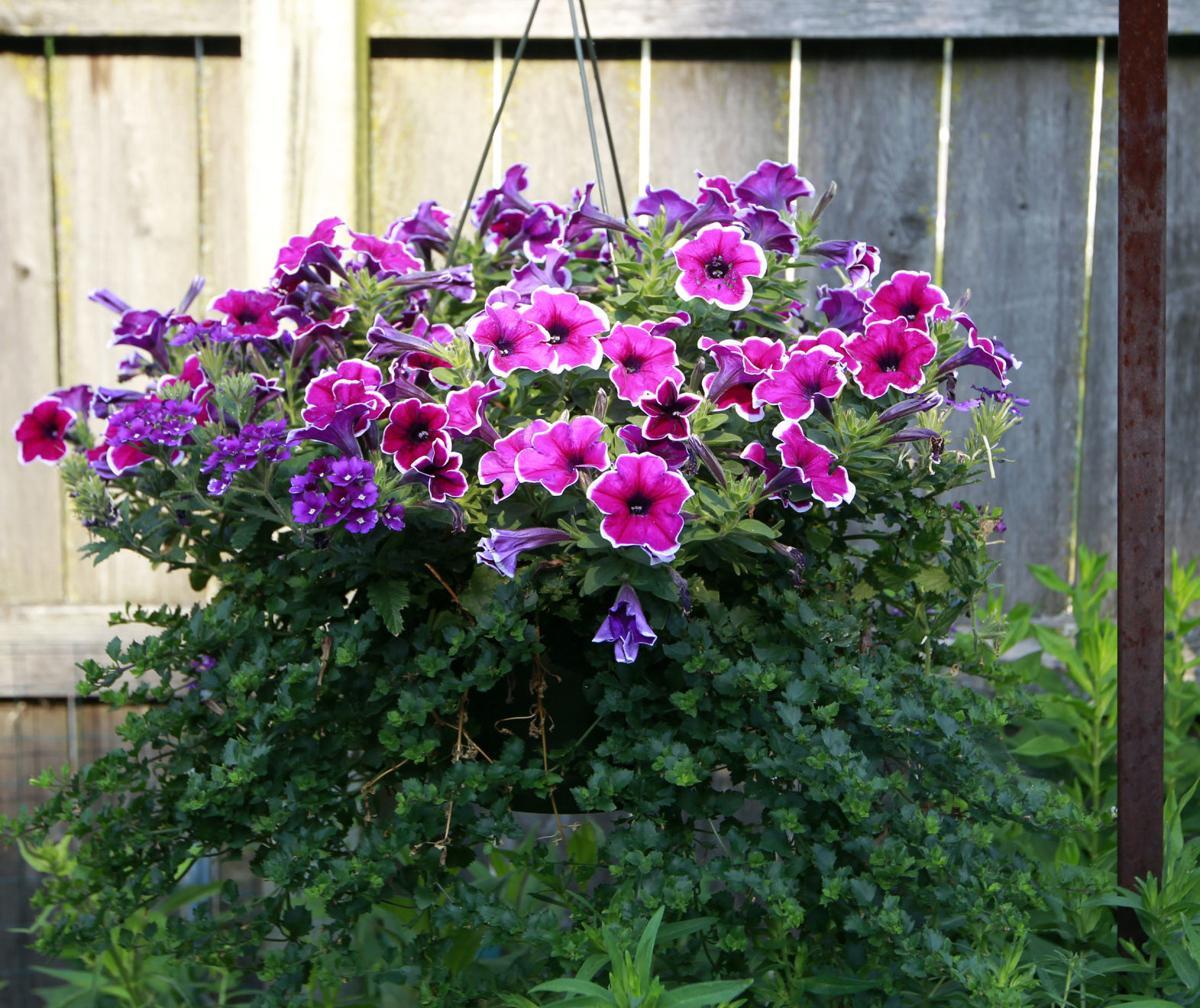 flower-pot-2.jpg