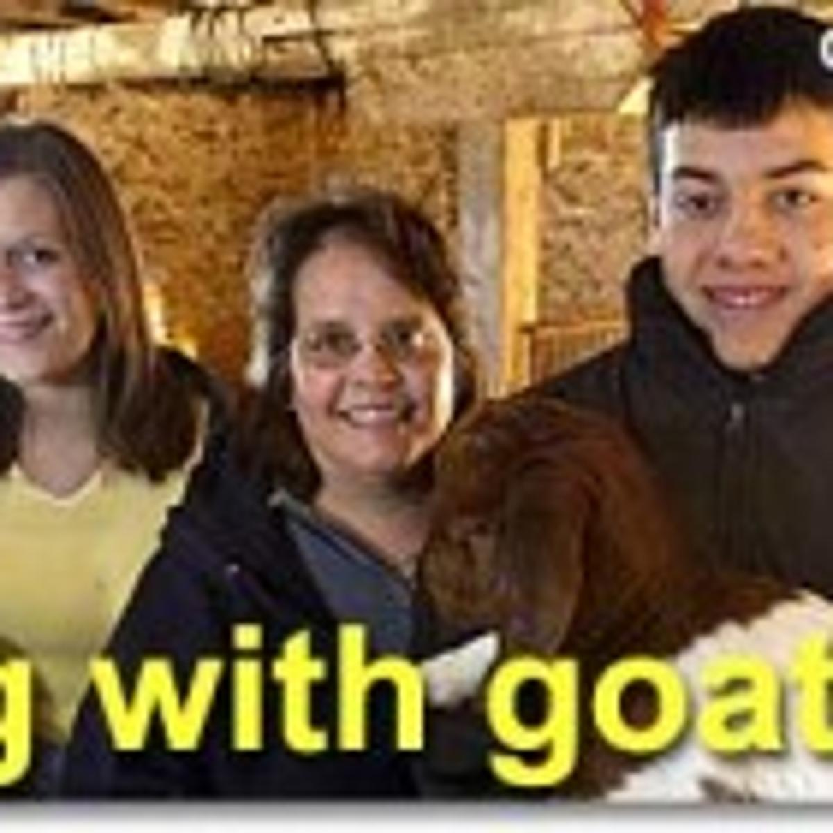 Going with goat: Iowans catch on to raising goats as more