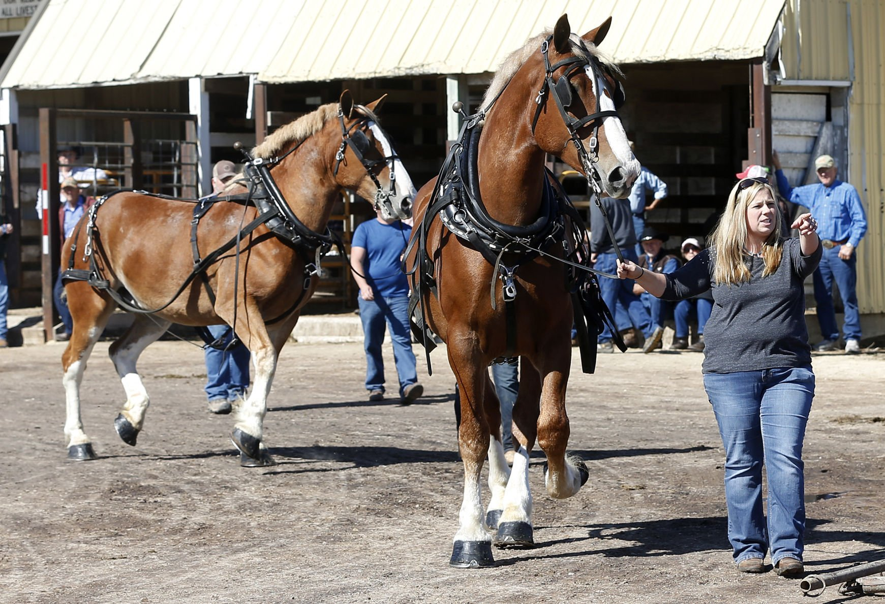 Horses Draw Crowds At Waverly Sale Local News Wcfcourier Com
