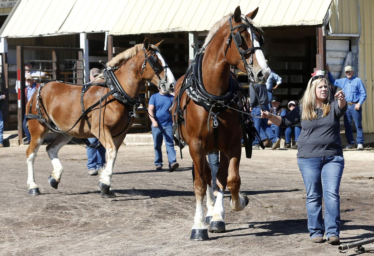 100417bp-waverly-horse-sale-2