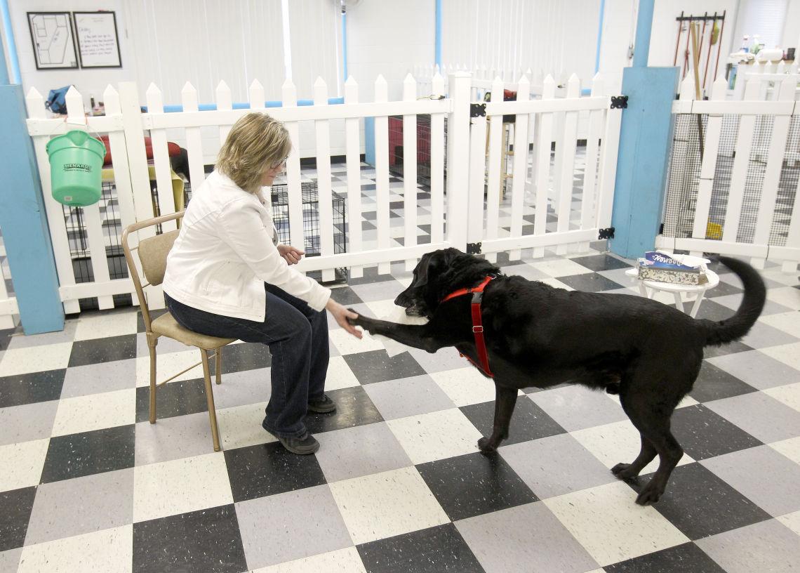 Black Dog Solutions Chicago