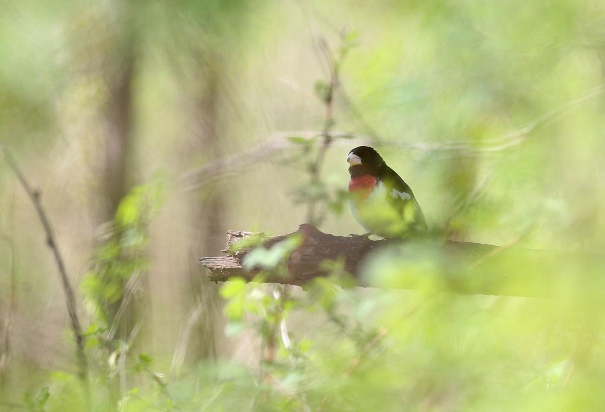 050918bp-bird-walk-06