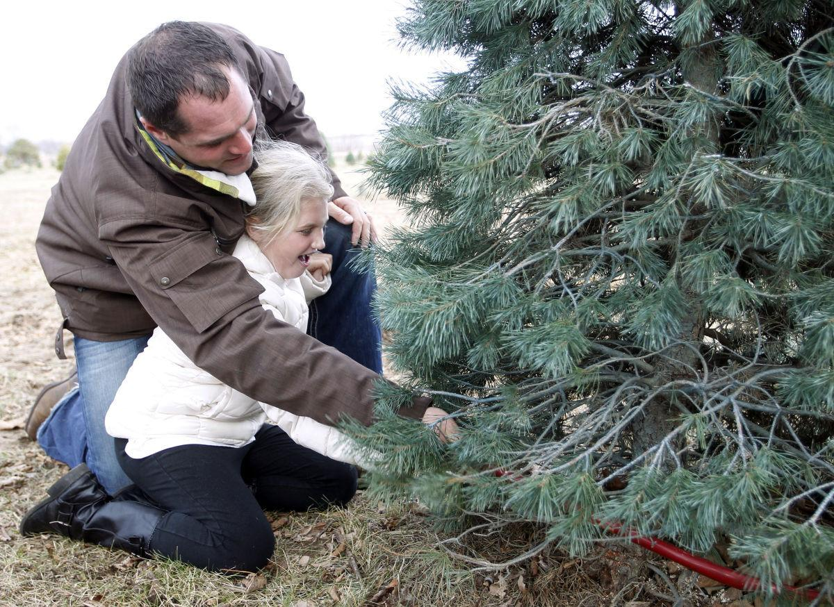 christmas tree sales off to fast start area growers report