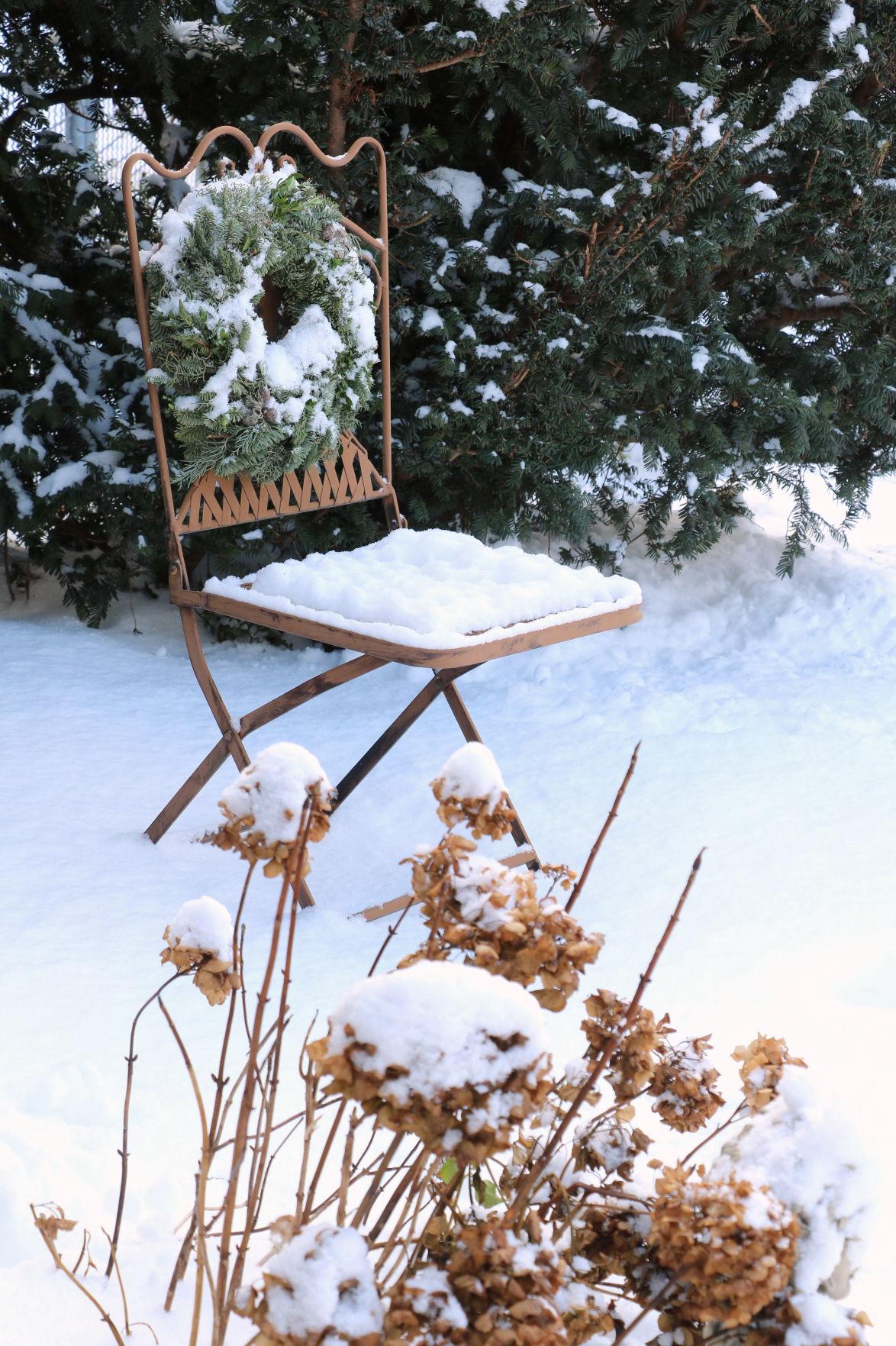 snow-in-garden