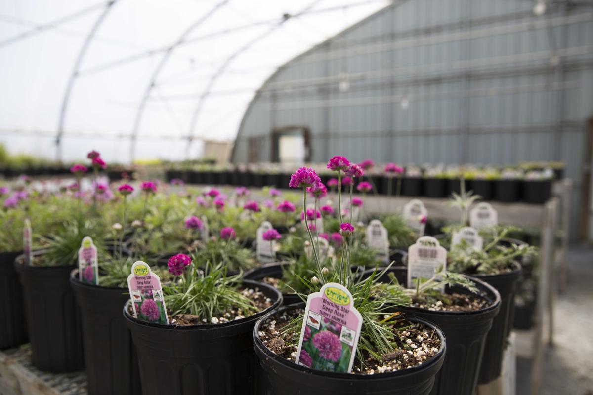 Local Garden Centers Nurseries Finding