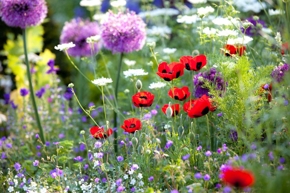 natural-garden