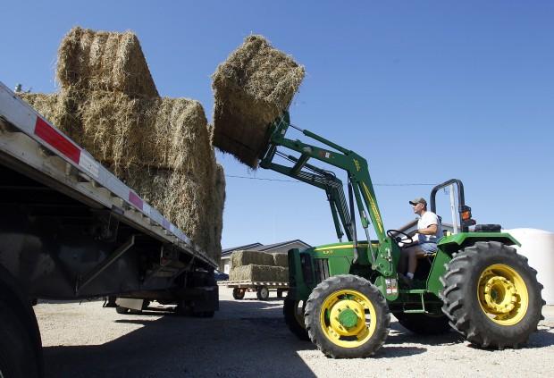 082911bp-luana-hay-loading1
