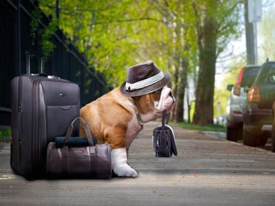 Survey reveals America's love for pets is evident in travel habits (image)