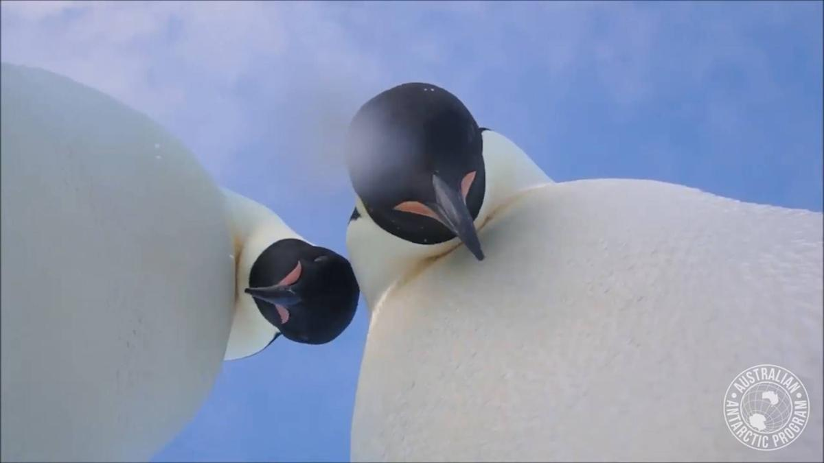 Penguin selfie2