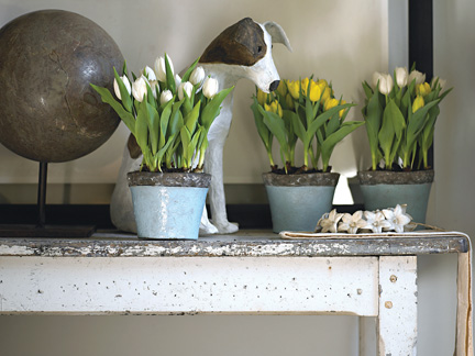 forced tulips main-10-18.jpg