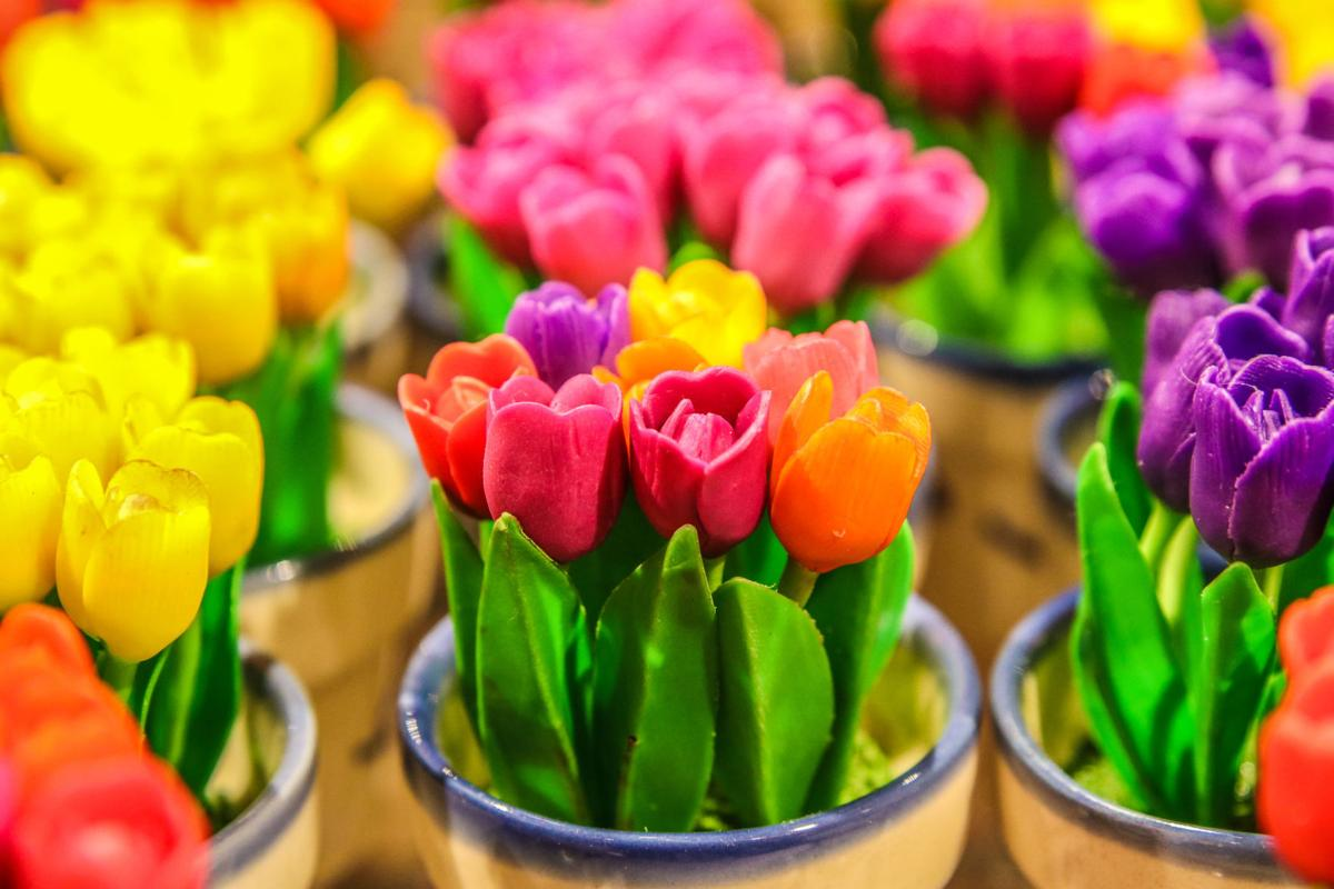 forced-tulips.jpg