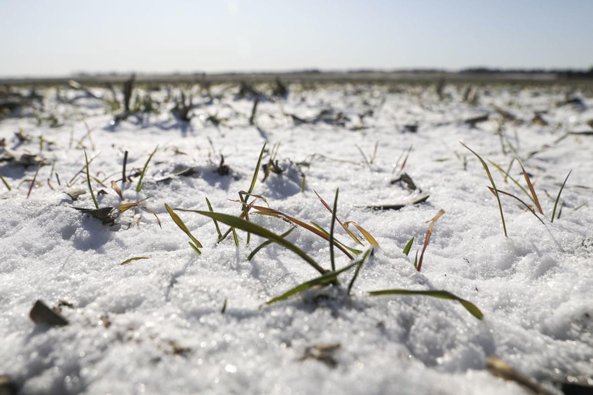110719ho-rye-grass