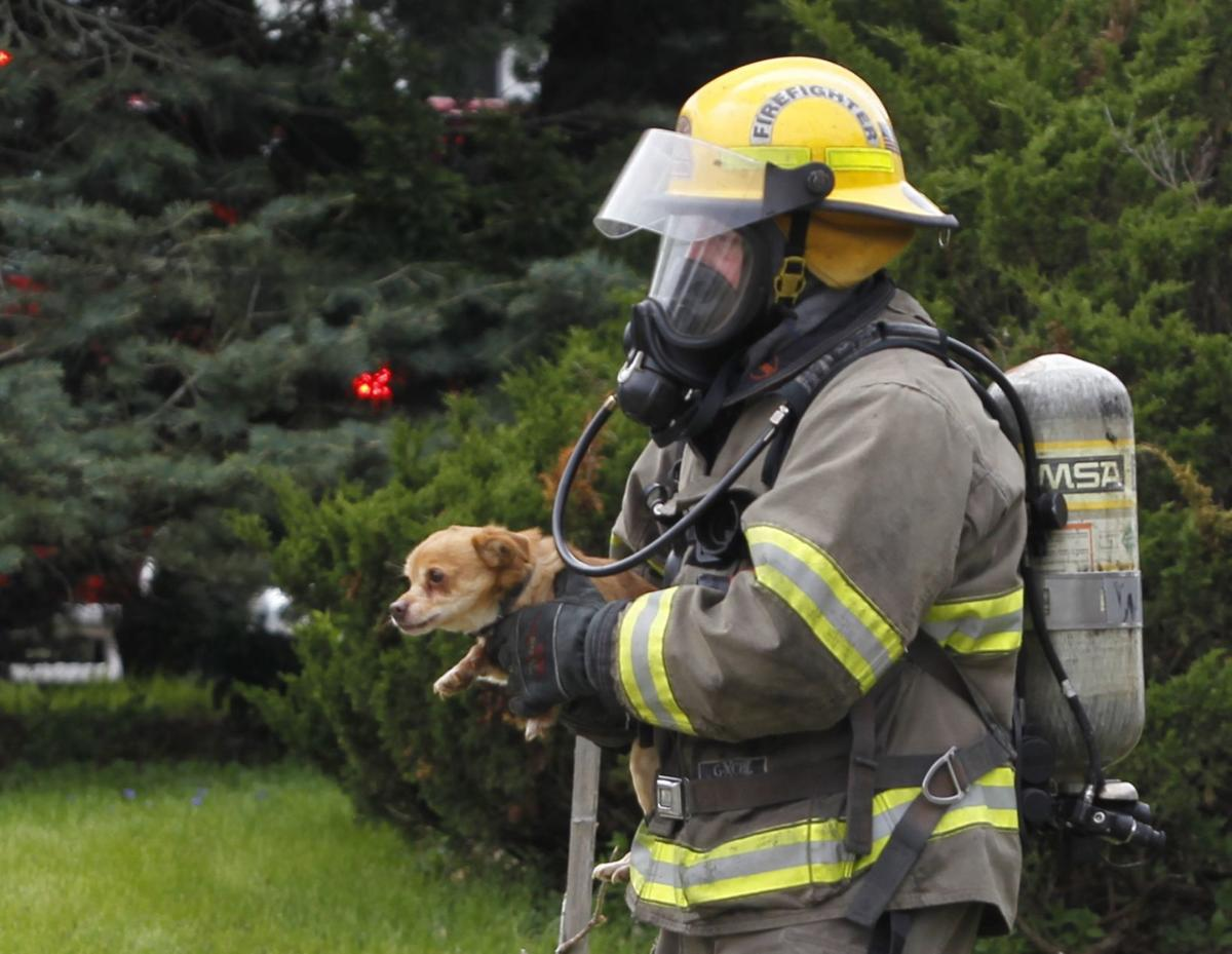 050719jr-lincoln-fire-dogs-1