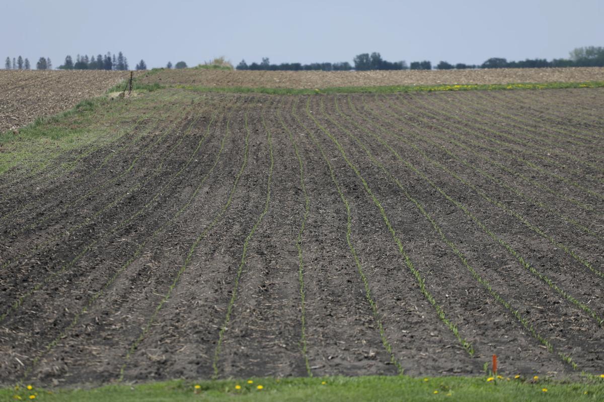 051518mp-crops