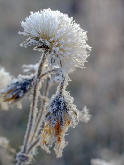 ice-ice-baby-garden