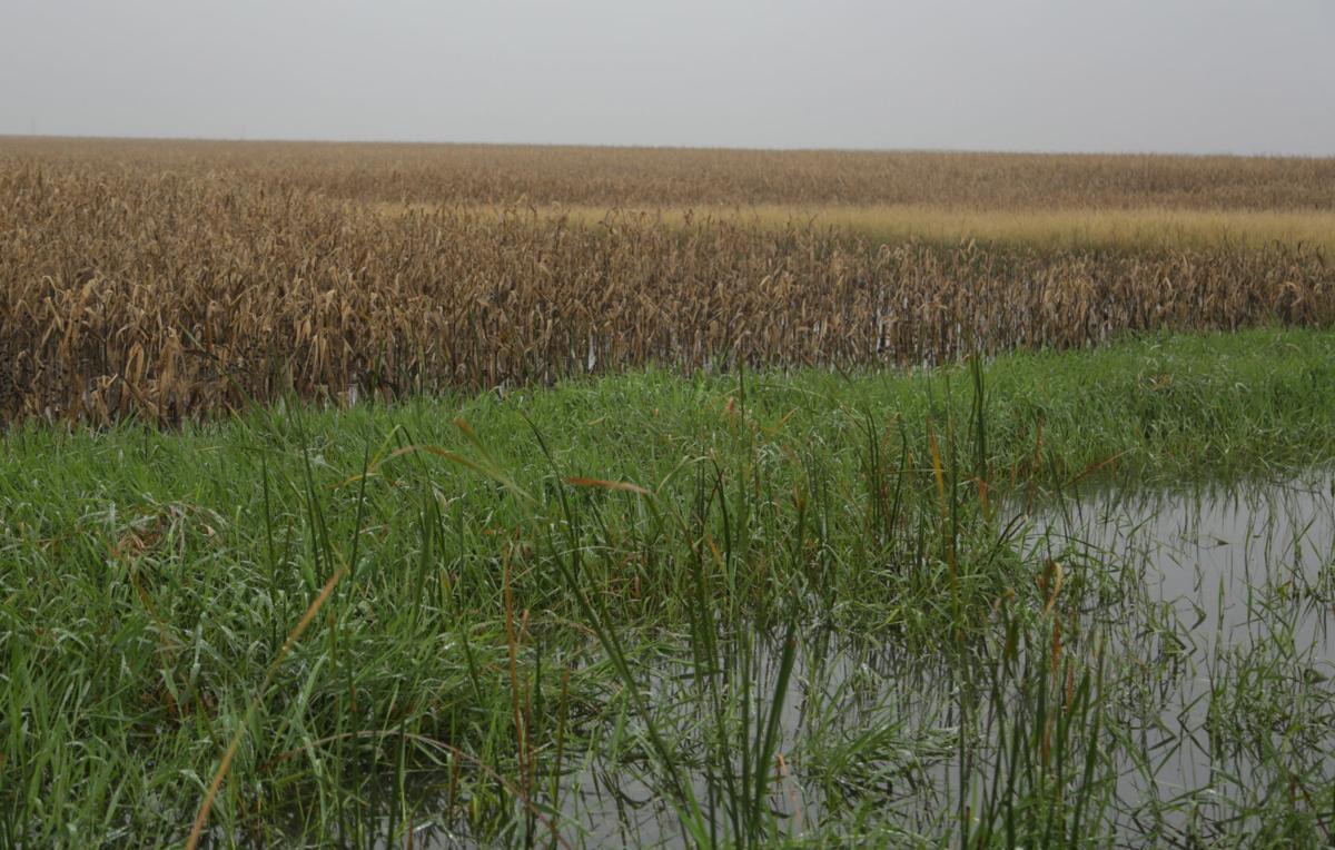 100818kw-floodedfield-02