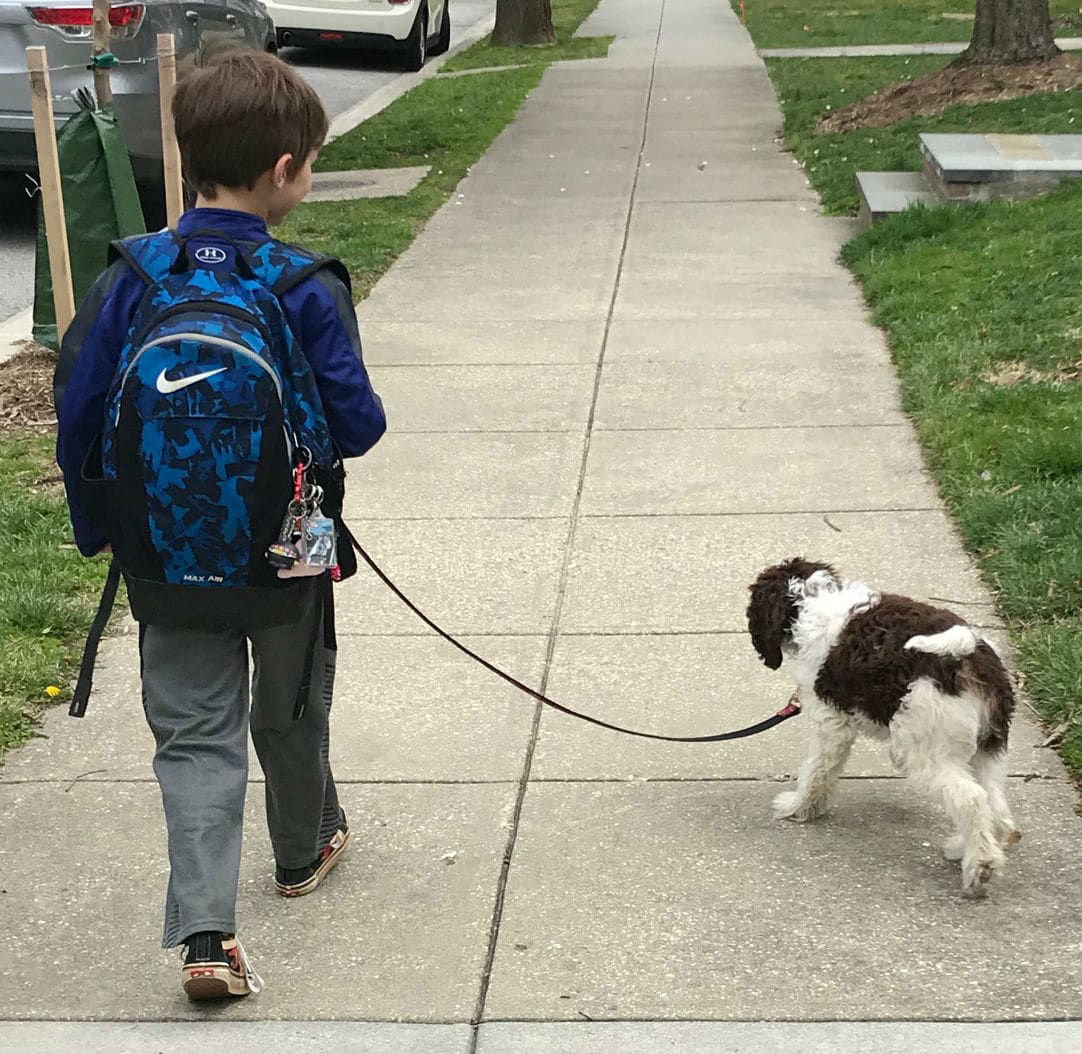 KIDS-DOGS