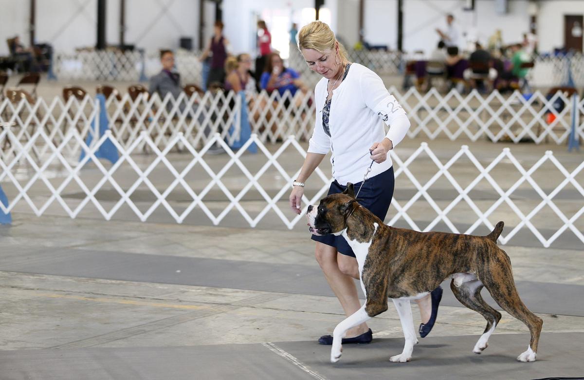 Waterloo Kennel Club Dog Show