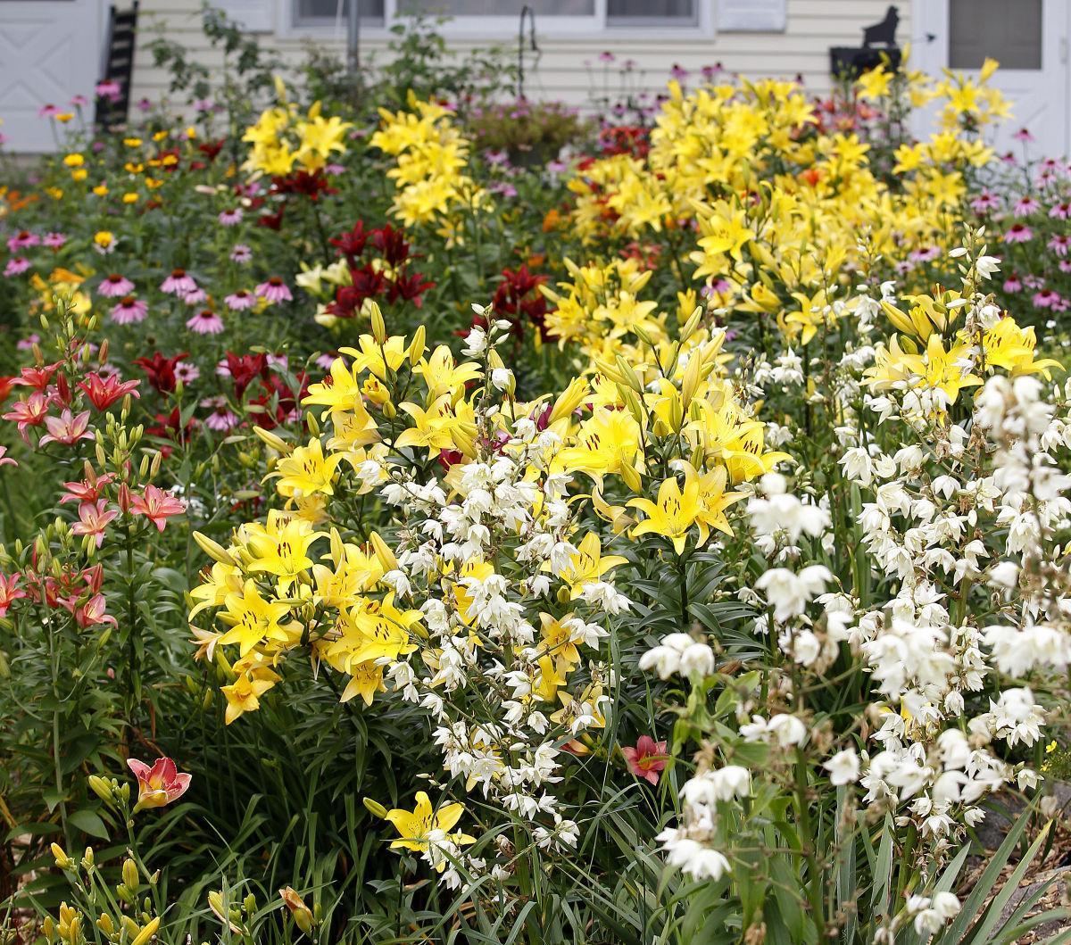 Front yard gardens | Gardening | wcfcourier.com