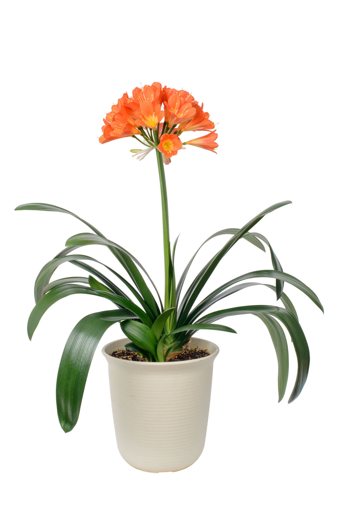 four houseplants that will survive winter garden wcfcourier com