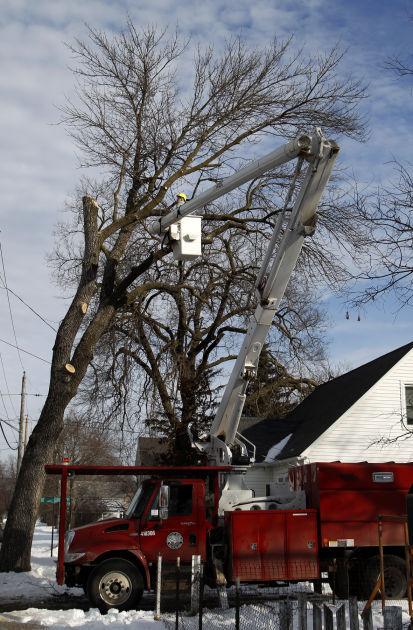 021015mp-Ash-Tree-Removal-3