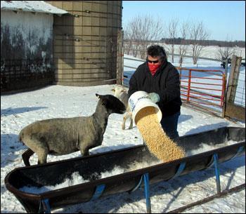 Profit opportunities raising sheep | Business - Local News