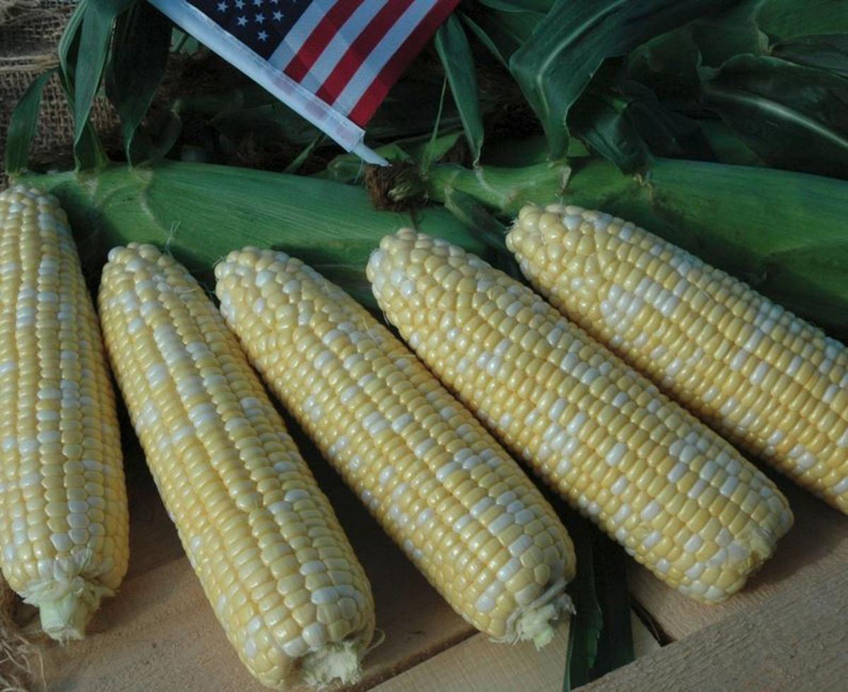 american-dream-corn