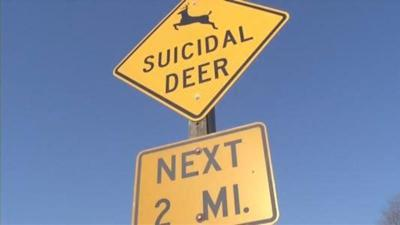 Suicidal deer sign