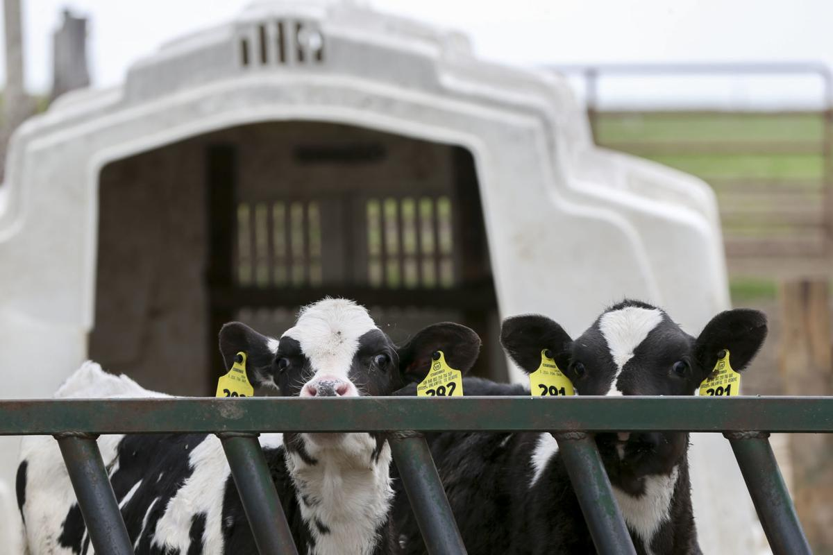 Dairyindustry1
