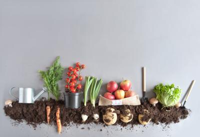 compost clip art