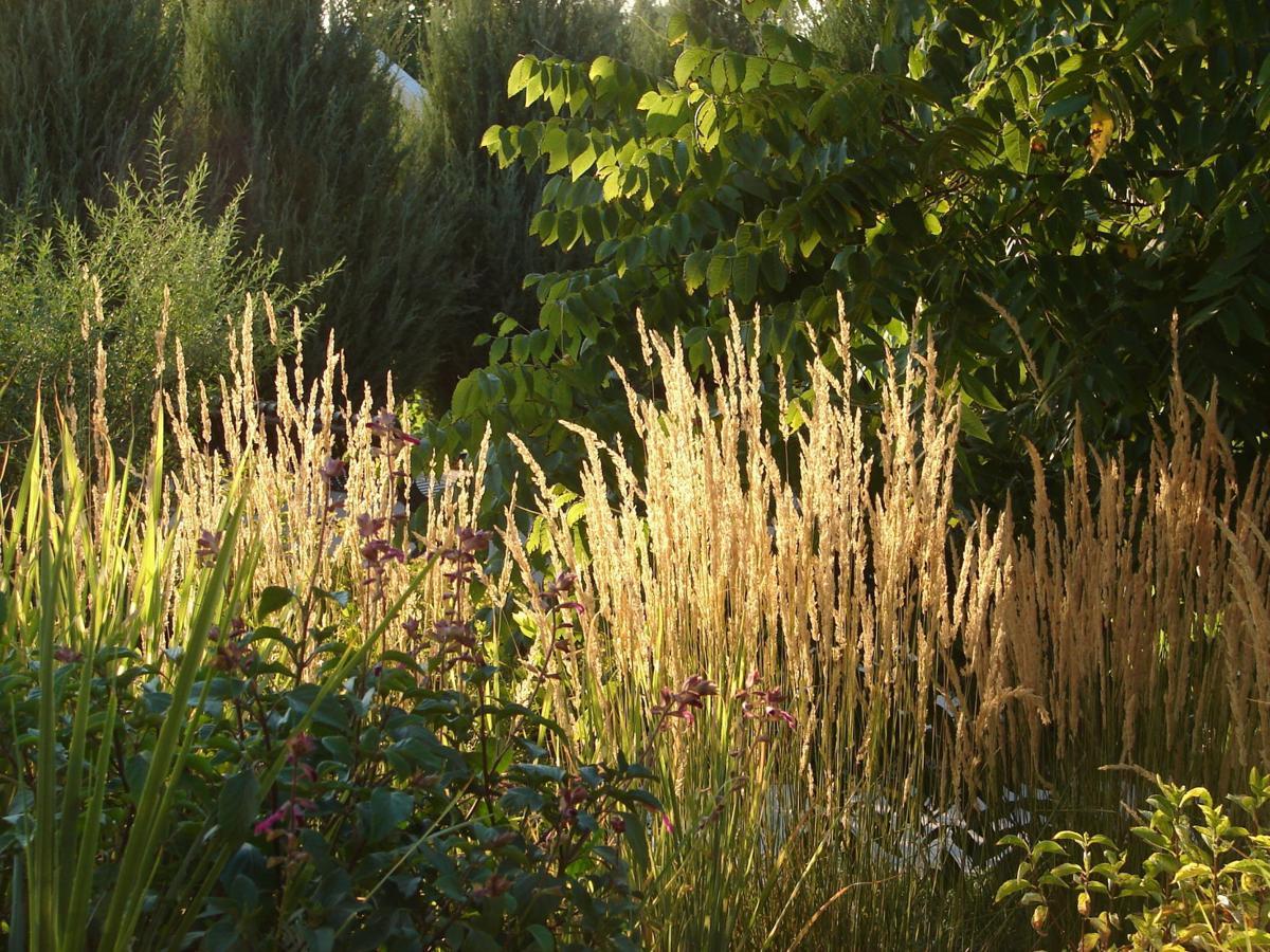 karl-foerster-ornamental-grass.jpg