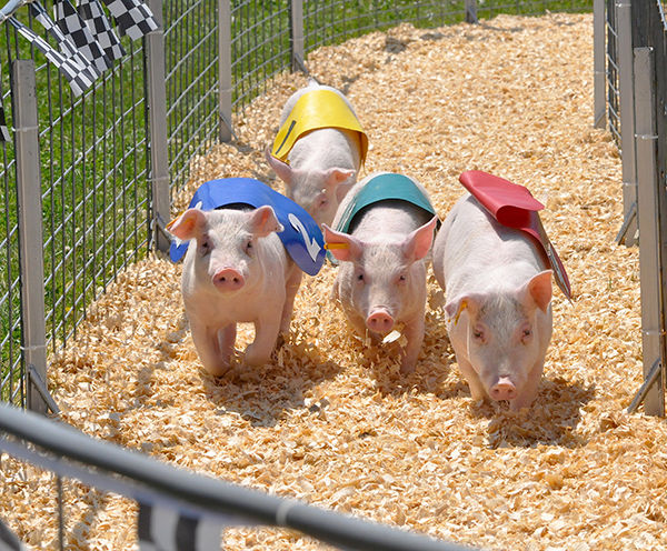 A squealing good time, duck and pig races draw crowd
