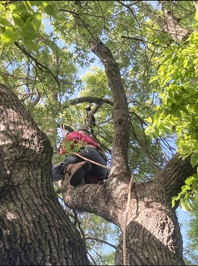 Tree service owner assists in saving cat from 40-foot branch