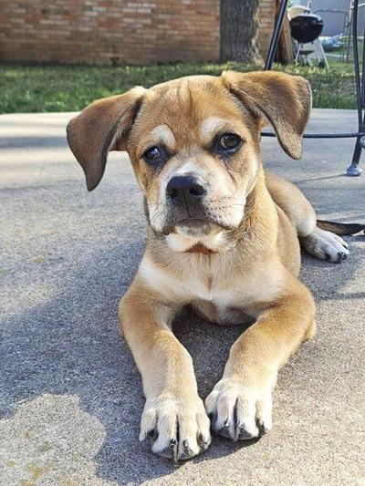 Injured pup captures hearts of city officials, finds forever home