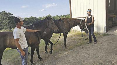 Cutting horse vet's horses slated for slaughter