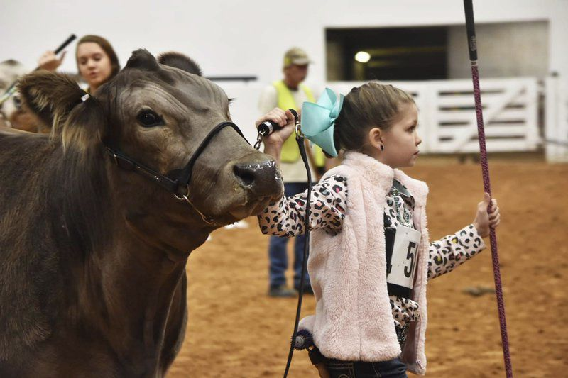 Weatherford youth takes it all at Fort Worth Braunvieh show