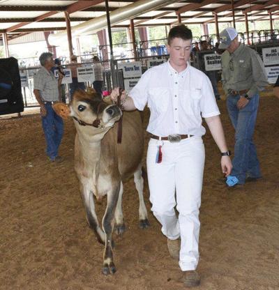 PCLIA Livestock Show begins