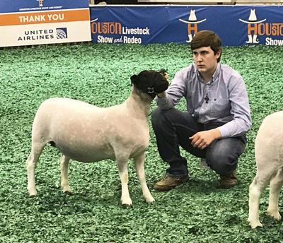 Brock student passing stock show skills on to others