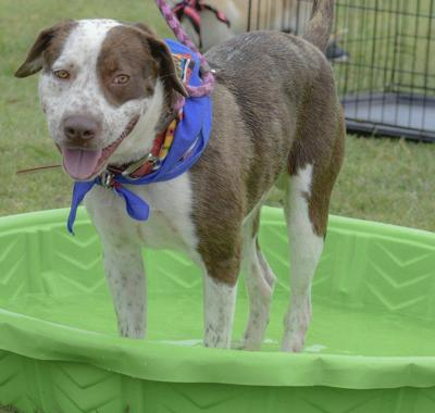 Shelter Pet of the Week - Dude