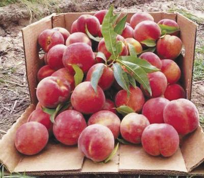 Parker County Peach Festival pivots