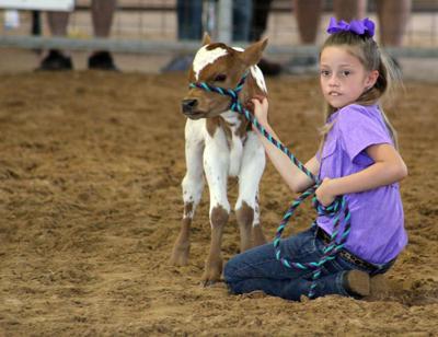 PCLIA Livestock Show